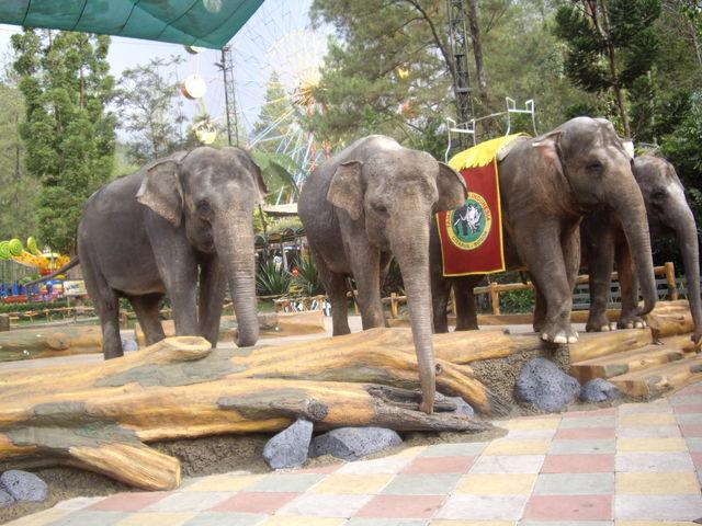 Olifanten Java Indonesië