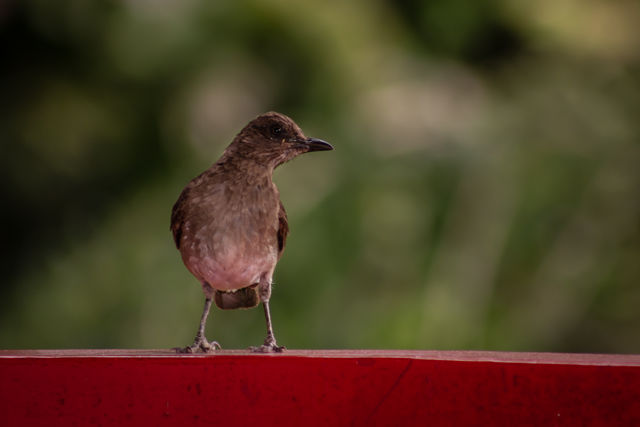 Rondreis Colombia Quindio Manizales Hacienda Venecia bijzondere vogels