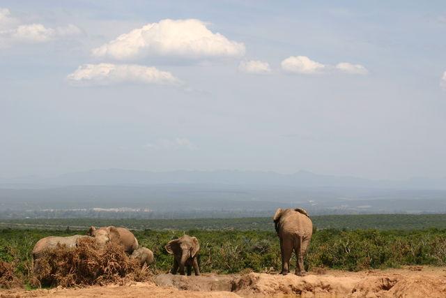 Rondreis Zuid-Afrika Addo Cosmos Cuisine olfanten landschap
