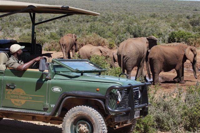 Rondreis Zuid-Afrika Addo Elephant Park safari