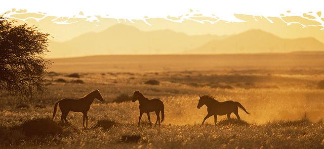 Rondreis Namibie Aus wilde paarden