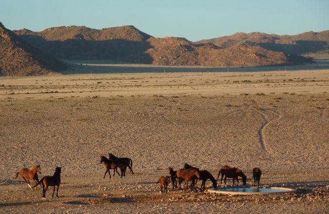 Rondreis Namibie wilde paarden Klein Aus Vista