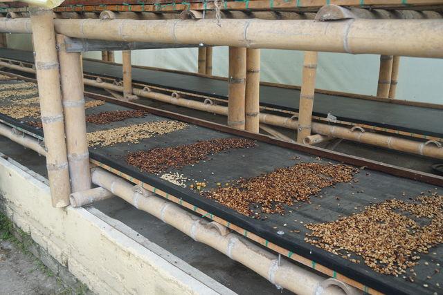 Rondreis Colombia Quindio Koffieregio koffiebonen liggen te drogen op een koffie hacienda