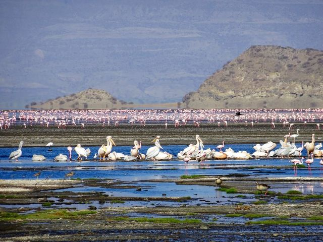 Safari rondreis Tanzania Lake Natron