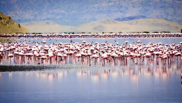 Safari rondreis Tanzania Lake Natron
