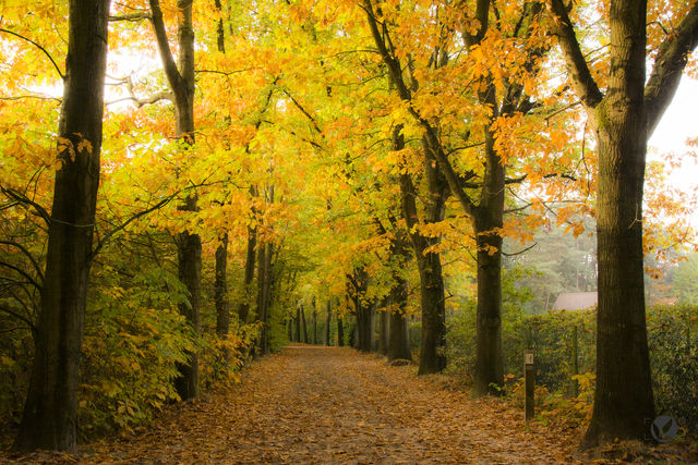 Herfst - Lembeekse Bossen