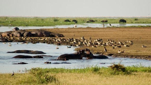 Safari rondreis Tanzania Lake Manyara