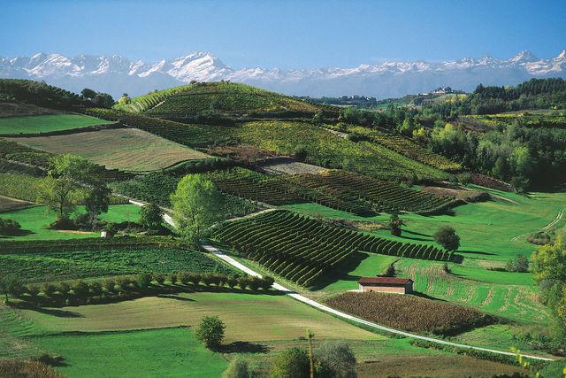 Italië Piemonte Monferrato wijngaarden