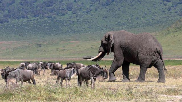 ri rondreis Tanzania Ngorongoro