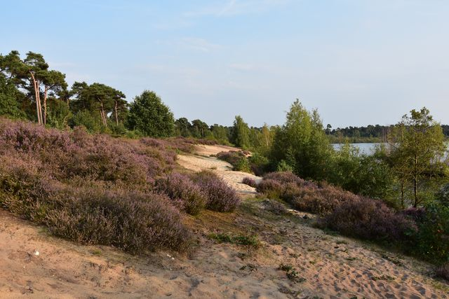 Nationaal Park Maasduinen Noord-Limburg Nederland