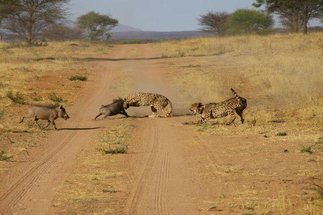 Rondreis Namibie Okonjima Nature Reserve