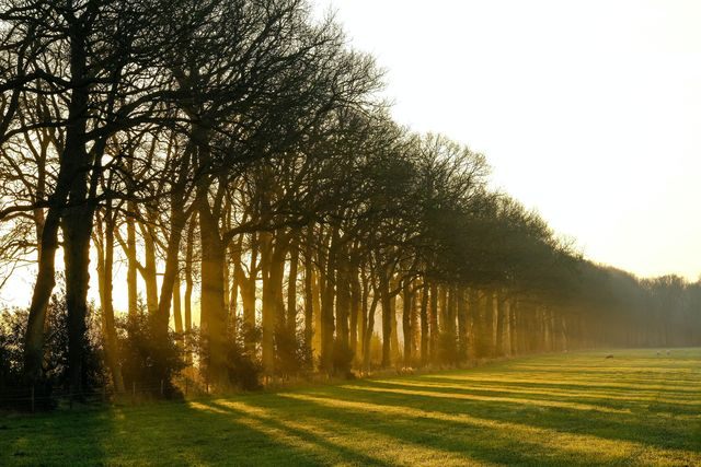 Oranjewoud Friesland Nederland