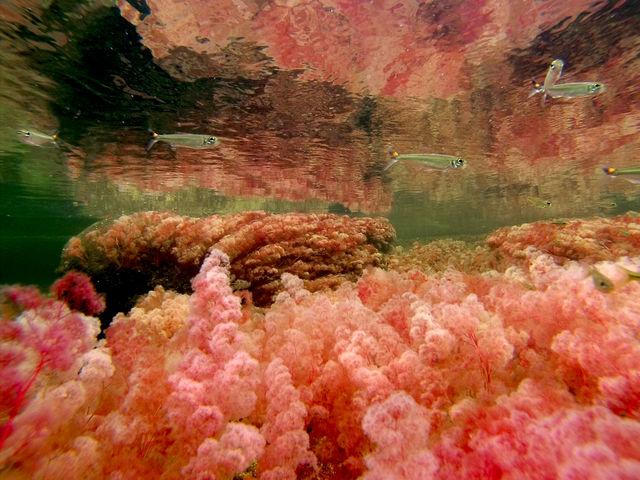 Rondreis Colombia Meta la Macarena Cano Cristales onderwaterbeeld