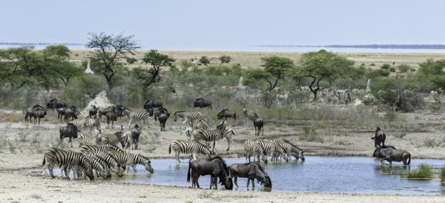 Rondreis Namibie Onguma Game Reserve Etosha