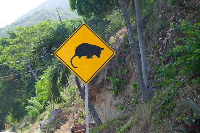 Rondreis Colombia natuur tal van overstekende zoogdieren, hier de muis