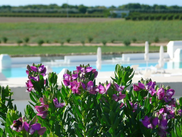 Rondreis Apulië luxe, 11 dagen – Italië | AmbianceTravel
