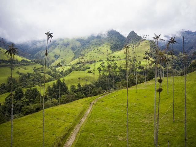 Rondreis Colombia Quindio Koffieregio hiken door de Valle de Cocora