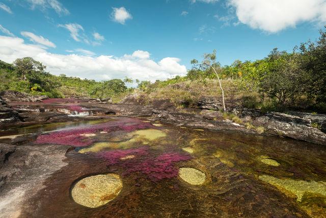 Rondreis Colombia Meta La Macarena poeltje met verschillende kleuren
