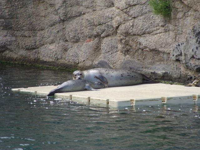 Montrove Aquarium Galicië Zeeleeuwen Spanje