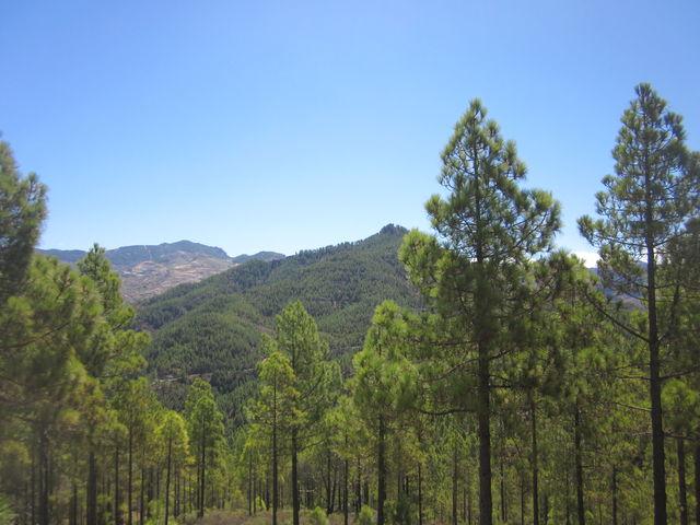 Parque Nacional Tamabada Canarische Eilanden La Palma