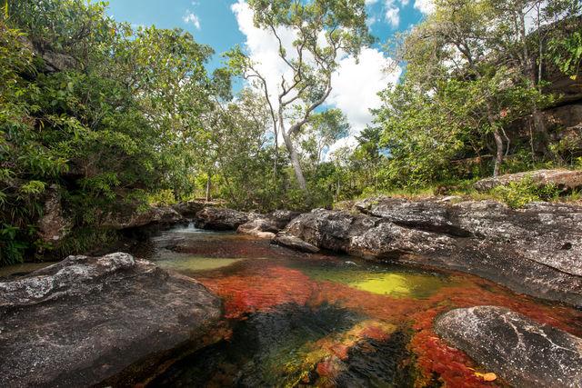 Rondreis Colombia Meta la Macarena Cano Cristales een veelkleurige rivier