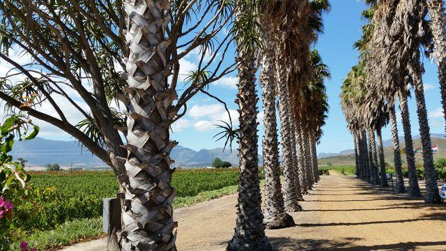 rondreis zuid-afrika Robertson wijngebied Van Looveren