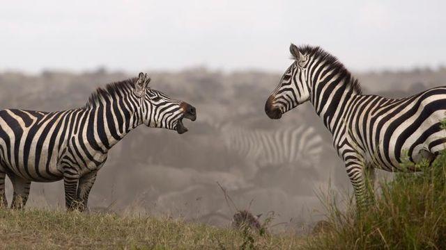 Safari rondreis Tanzania Serengeti