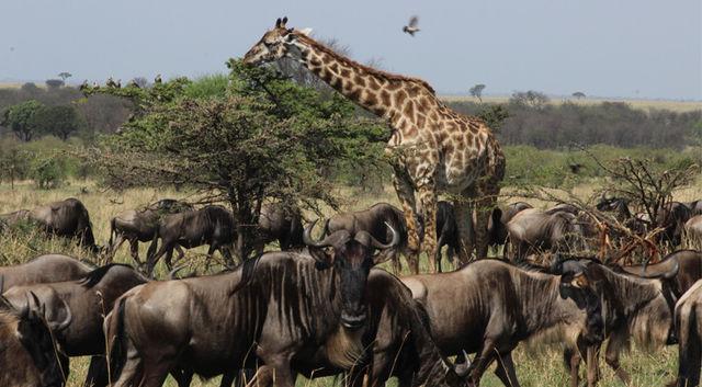 ri rondreis Tanzania Serengeti