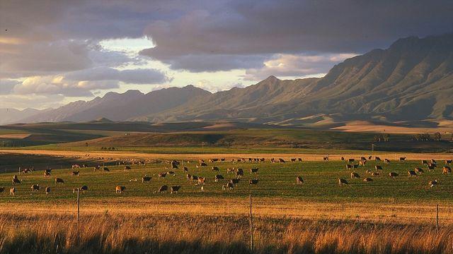 rondreis zuid-afrika Swellendam landschap