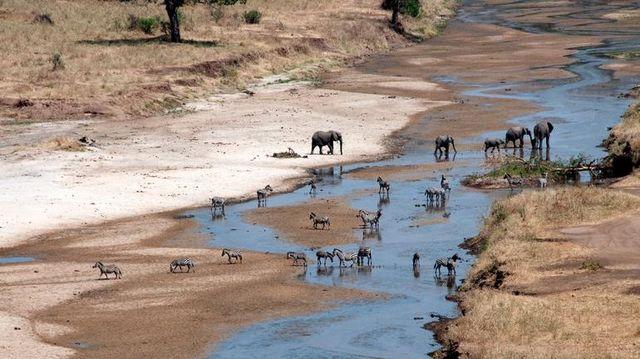 Safari rondreis Tanzania Tarangire
