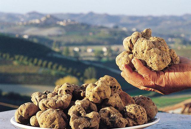 Italië Piemonte truffel