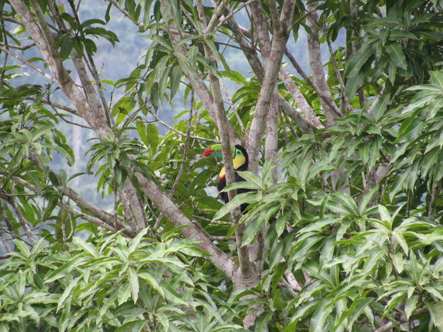 Rondreis Colombia natuurbeleving Toekan Amazonas