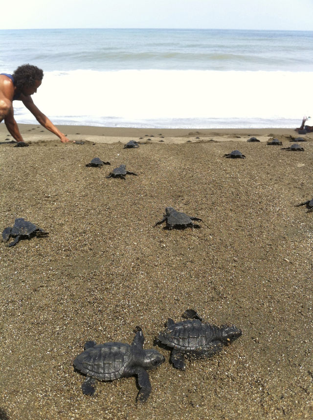 Rondreis Colombia Choco Nuqui El Cantil Ecolodge zeeschildpadjes op het strand