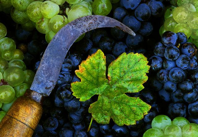 Bilbao wijn Txakoli druif Spanje