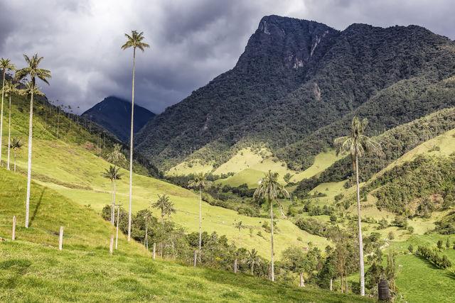 Rondreis Colombia Quindio Koffieregio zon schijnt in de Valle de Cocora