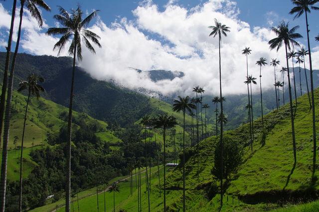 Rondreis Colombia Quindio Koffieregio mooie luchten in de Valle de Cocora