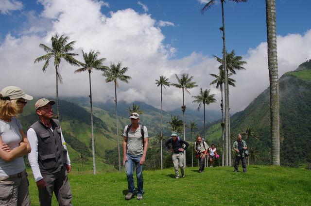Rondreis Colombia Quindio Koffieregio wandelen met een gids door de Valle de Cocora