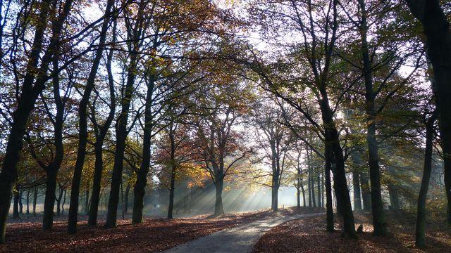 Wandelpad Veluwe Gelderland Nederland