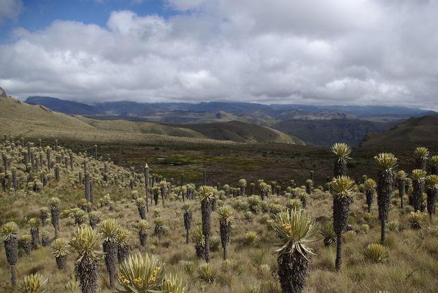 Rondreis Colombia Quindio Nevados NP vergezicht