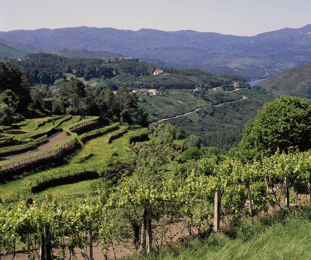 Wijnterrassen Noord-Portugal
