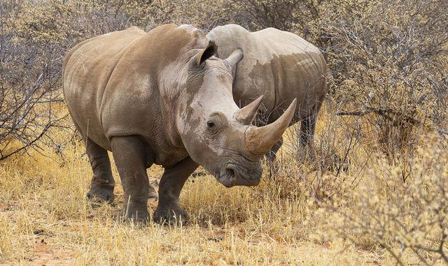 Rondreis Namibie Waterberg Plateau neushoorns