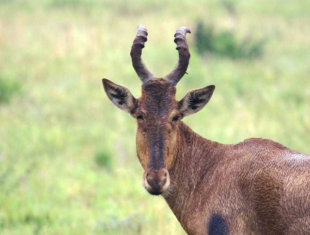 Rondreis Zuid-Afrika wildlife Kruger Park