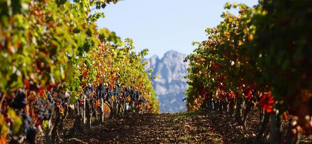 Rondreis Spanje Santo Domingo de la Calzada Rioja wijngaard