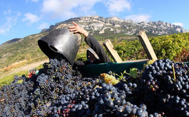 Rioja wijngaard Baskenland Spanje