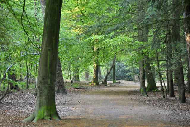 Wandelpad Mastbos Breda Noord-Brabant