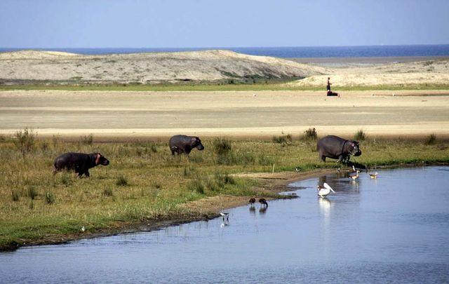 Rondreis Zuid-Afrika iSimangaliso wetlands