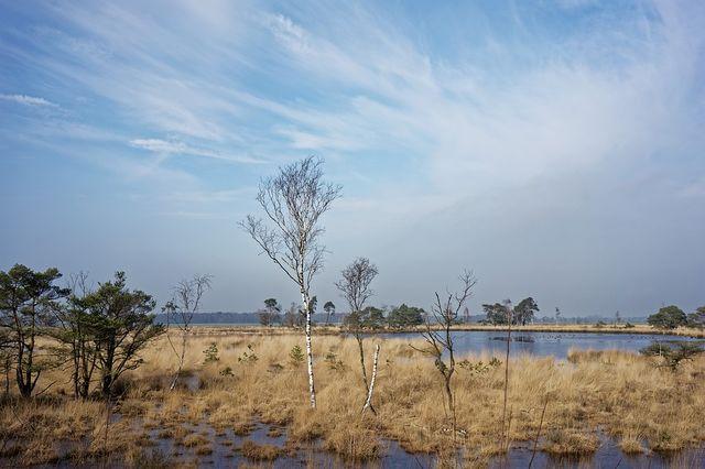 Kalmthoutse Heide, Noord-Brabant
