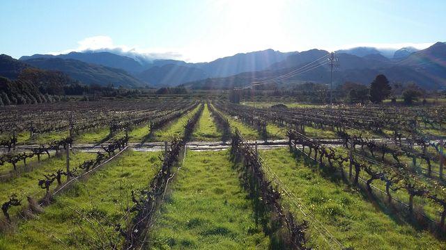Wijnlanden Stellenbosch en Franschhoek