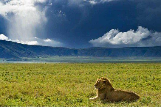 Rondreis wildparken van Tanzania  AmbianceTravel