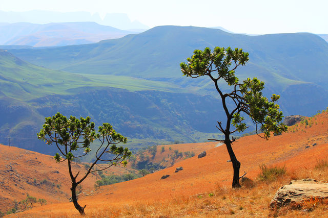 Rondreis Zuid-Afrika Drakensbergen